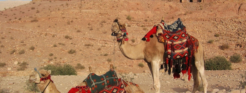 Middle east - shellseekers